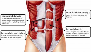 How To Exercise The Obliques-The Most Effective Ways