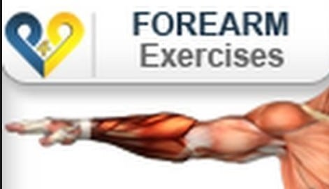 forearm muscle building exercises